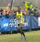 Edward Cheserek in the homestretch just before winning his second NCAA Division I Cross Country Title in Terre Haute, Ind. (photo by Chris Lotsbom for Race Results Weekly)