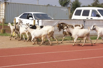 Kwemoi's audience for the Thursday workout