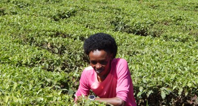 Sumgong Was All Smiles in the Tea Plantations Last Mnoth