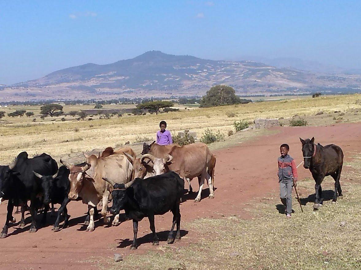 The Final Day in Ethiopia: Kenenisa Bekele's Bar & Training